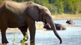 Beeindruckende Tierwelt: In den Feuchtgebieten