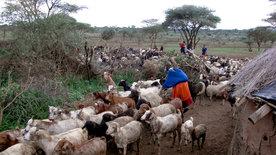 Die Tierärzte vom Kilimanjaro (3/3)