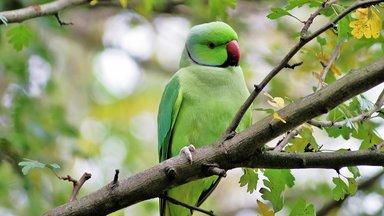 Terra Xpress - Ehedrama An Der Ostsee Und Die Wilden Papageien