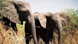 Mike und die Wege der Elefanten