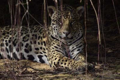 Wildes Pantanal (2/2)