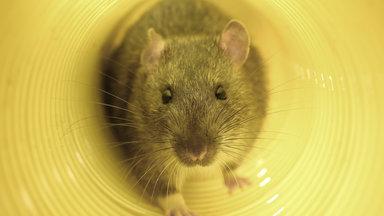 Planet E. - Planet E.: Ratten In Der Stadt - Die Invasion Der Nager