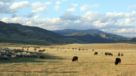 Yellowstone (2/3)