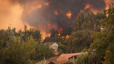 Planet E. - Wenn Die Wälder Brennen