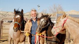 Mustangs - Lebende Legenden