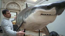 Die Jäger des Mittelmeeres: Haie vom Aussterben bedroht