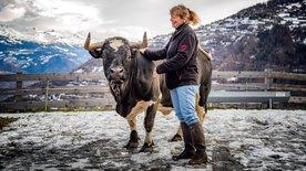 SCHWEIZWEIT: Doktor Julie und die Kühe