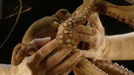 Nathalie und der Oktopus