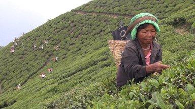 Planet E. - Planet E.: Abgebrüht - Das Bittere Geschäft Mit Dem Tee