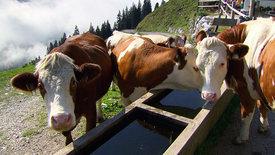 Urlaub am Bauernhof - Landlust im Trend