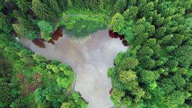 Wunderbare Waldwelt - Wie diese grünen Oasen zum<br/>Klimaschutz und zu unserer Gesundheit beitragen