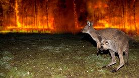 Koala, Wombat & Co.