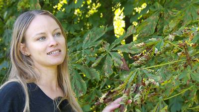 Exoten in Oberösterreich - Tiere und Pflanzen als<br/>Einwanderer