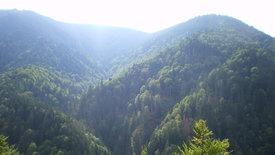 Europas Urwälder: Wilde Karpaten