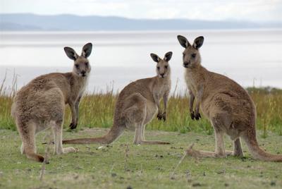 Tasmanien - Insel am Ende der Welt