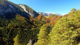 Wildnisse im Herzen Europas - Österreichs Nationalparks