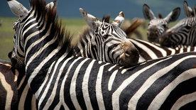 Wilde Überlebenskünstler - Wie Tiere sich herausputzen