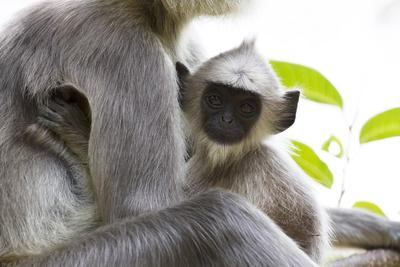 Wilde Inseln: Sri Lanka