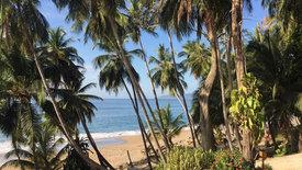 Grünes Wunder Costa Rica