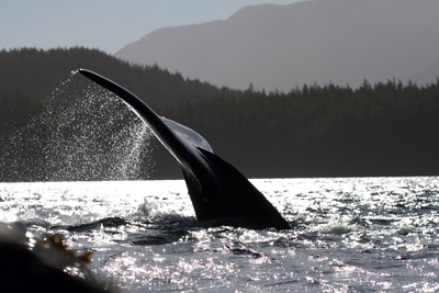 Wilde Inseln: Vancouver Island