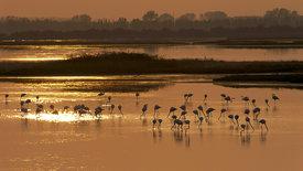 Der ewige Kampf - Fluss und Meer im Po-Delta