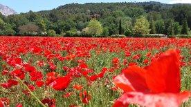 Aix-en-Provence, da will ich hin!
