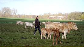 Die Nordreportage: Unter Lämmern und Kühen