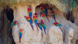 Schatzkammer Regenwald -<br/>Der Manu-Nationalpark in Peru