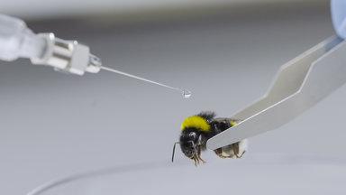 Planet E. - Planet E.: Die Insektenretter