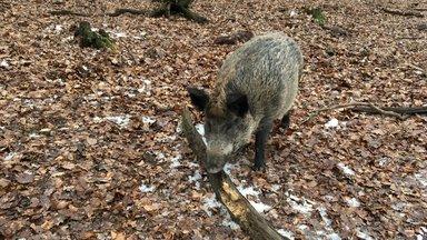 Terra Xpress - Vorgarten-schweine Und Ganovenjäger Im Netz