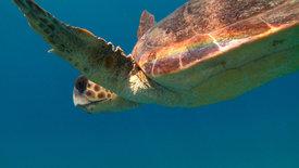 Die schlaueste Schildkröte der Welt