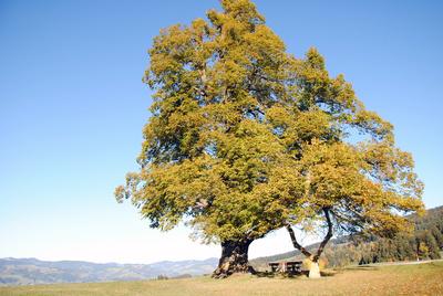 Die geheimnisvolle Welt der Bäume -<br/>Naturschätze der Steiermark