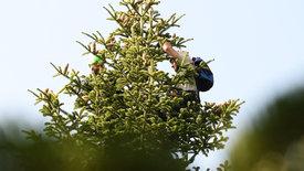 Oh Tannenbaum - Das große Geschäft mit Weihnachten