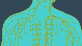 Stiefkind der Medizin: das Lymphsystem