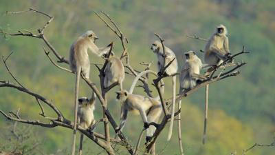 Naturparadies: Indien