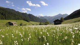 Tiroler Naturjuwelen