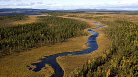 Europas Urwälder: Unberührtes Lappland