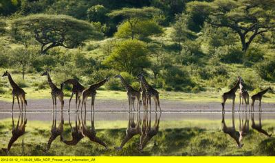 Serengeti (1/2)