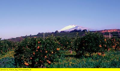 Cannoli, Couscous und Pistazien