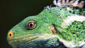 Die Südsee: Tierische Eroberer