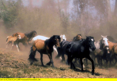 Spaniens wilde Pferde
