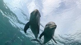 Die Farm der Delfine