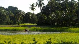 Reisen in ferne Welten: Sansibar