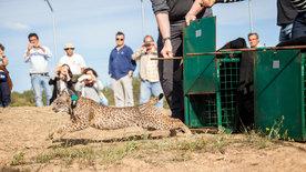 Portugal - Die Rückkehr der wilden Tiere