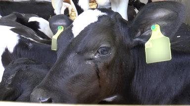 37 Grad - Geheimsache Tiertransporte - Wenn Gesetze Nicht Schützen