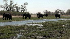 Botswana: Das Ende vom Elefantenparadies?