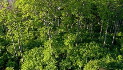 Wiener Wälder - Grüne Juwele