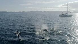 Die Sprache der Wale