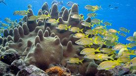 Wunder der Karibik - Die Korallengärten