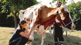 Ausgemolken! Bauern steigen aus der Nutztierhaltung aus